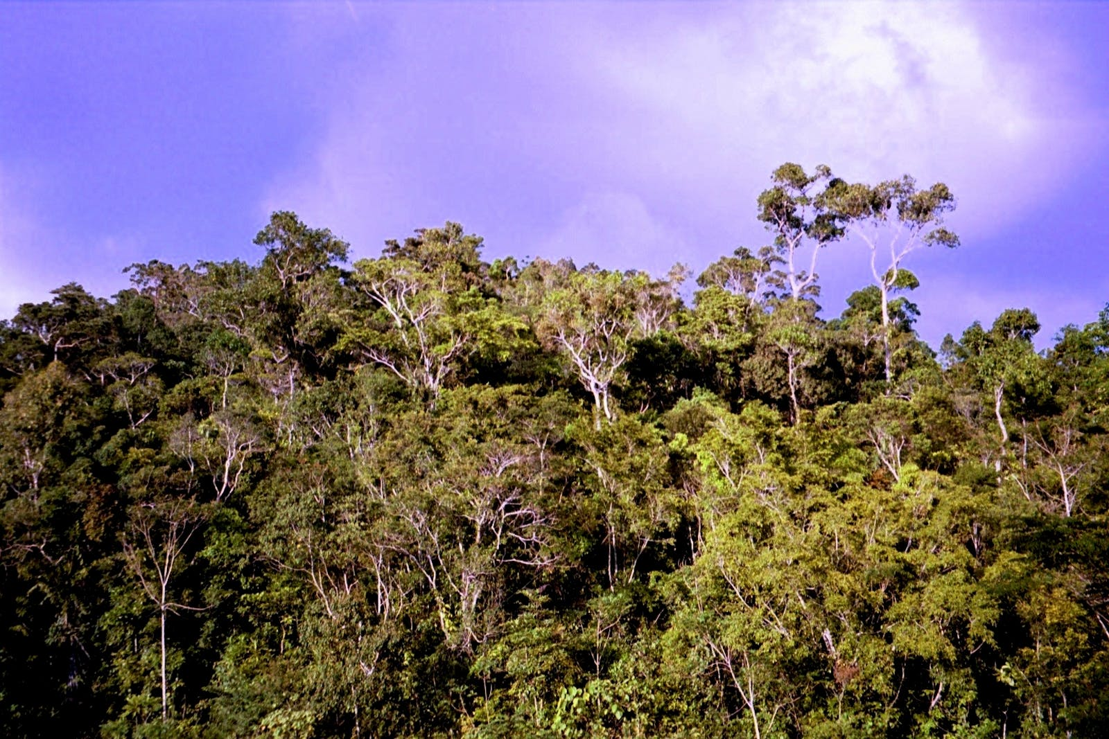 Greater Negros-Panay Rainforests