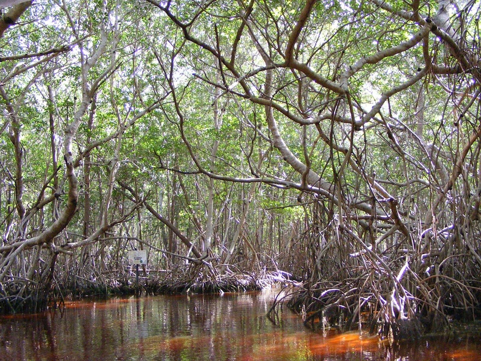 Mesoamerican Gulf-Caribbean Mangroves