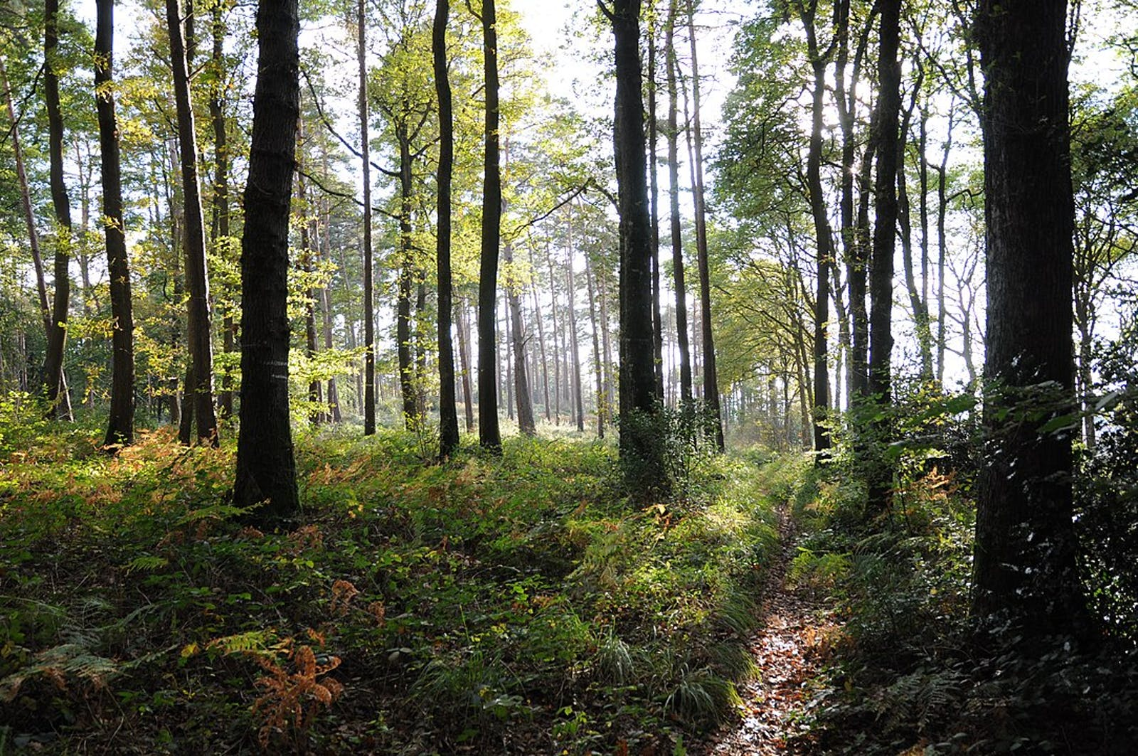 European Atlantic Mixed Forests