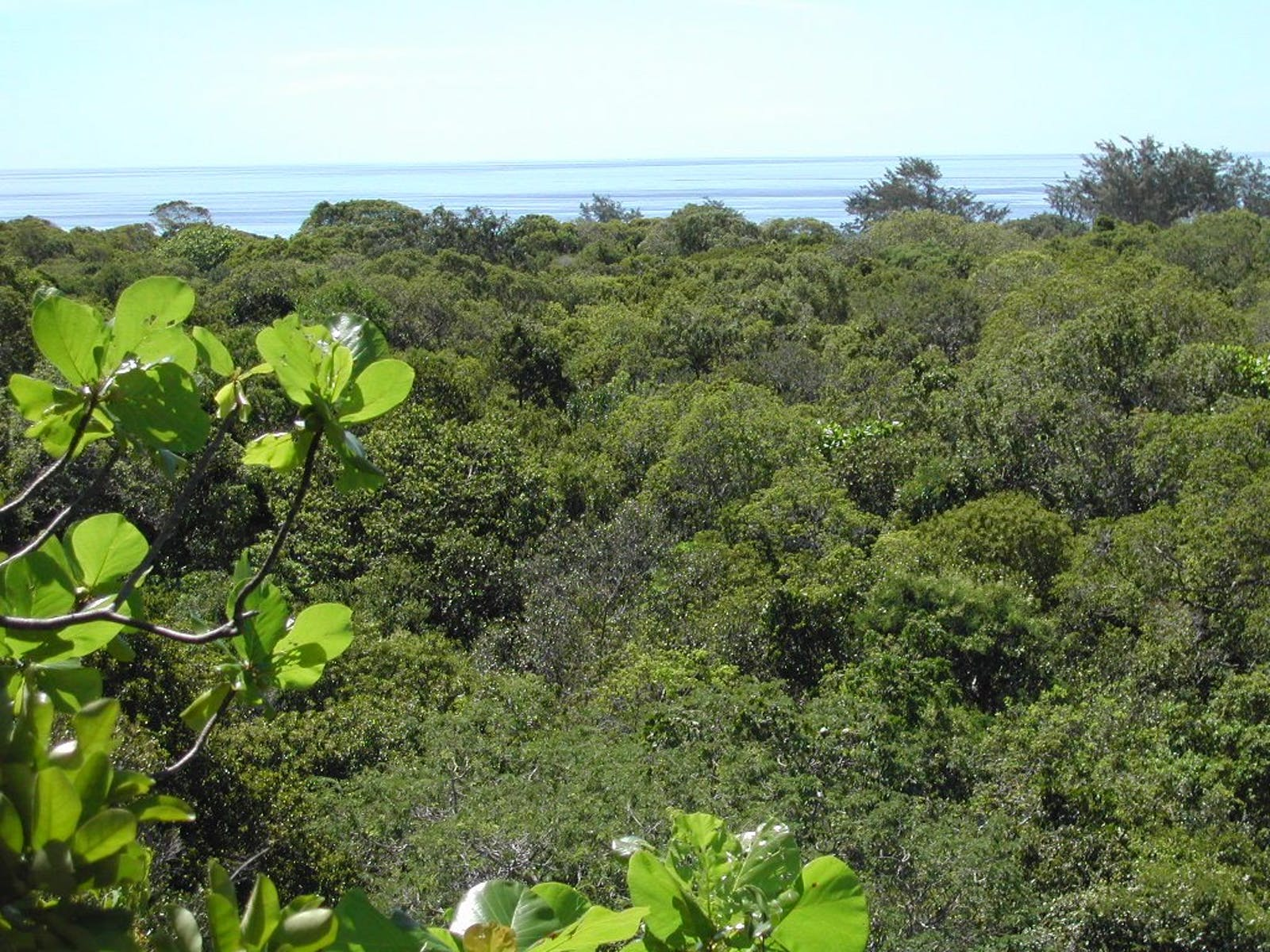 Timor and Wetar Deciduous Forests