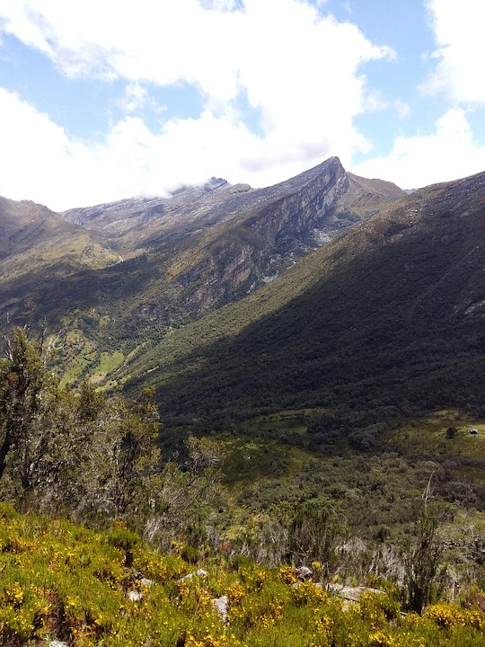 Magdalena Valley Montane Forests