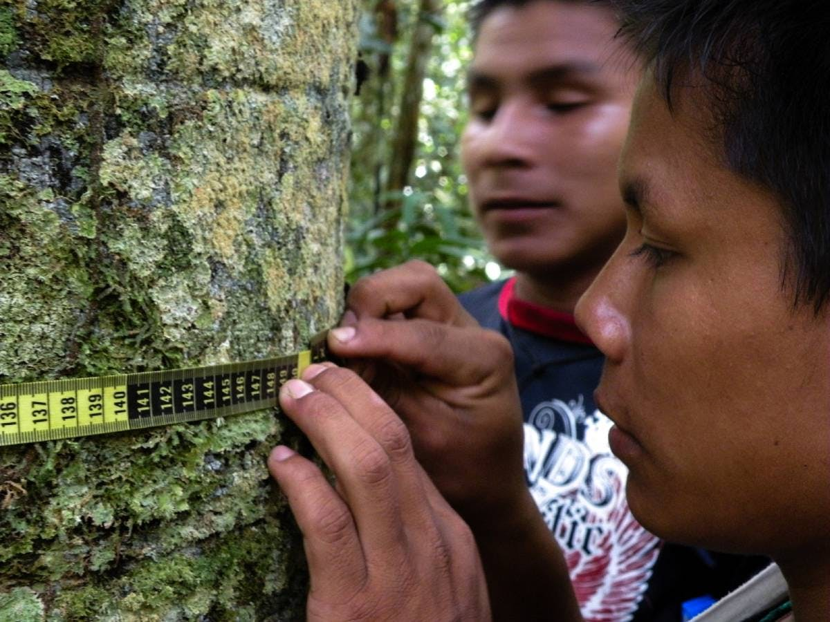 Technology and Indigenous knowledge combine to protect the Amazon