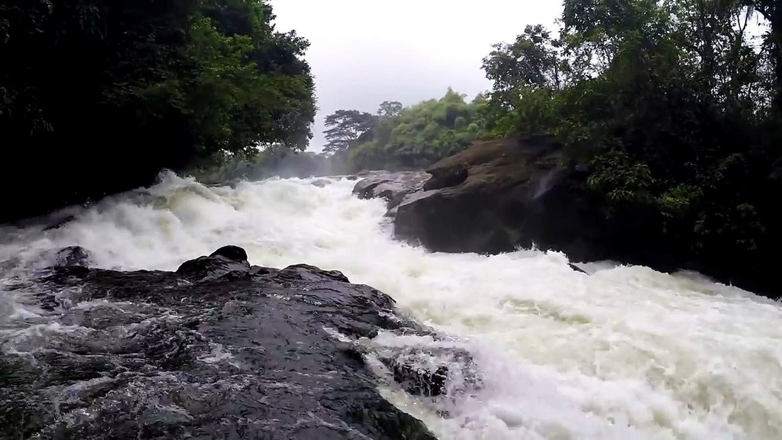 Cross-Sanaga-Bioko Coastal Forests