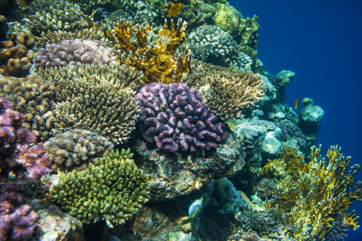 The roadmap to saving coral reefs with the innovative Allen Coral Atlas
