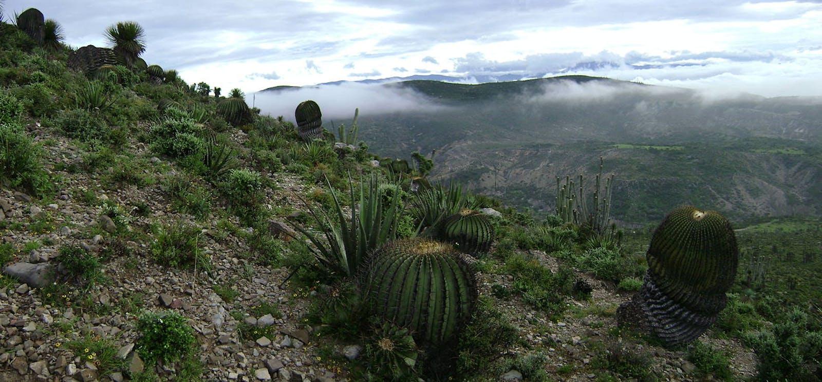 Tehuacán Valley Matorral