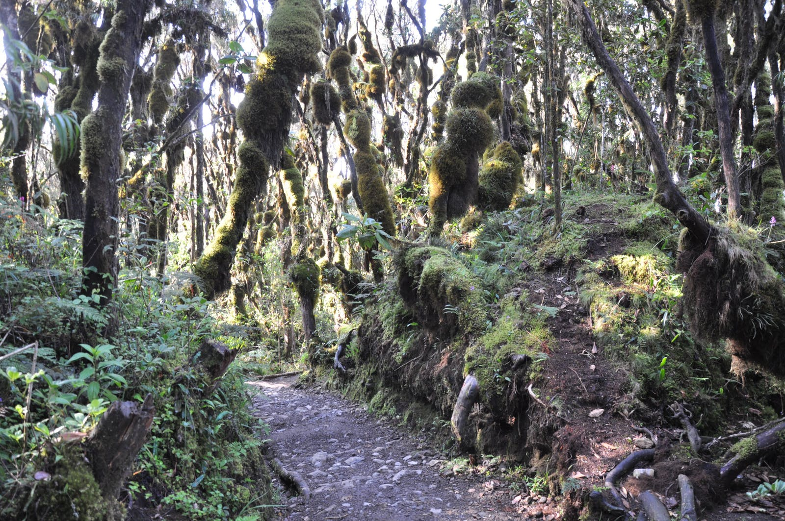 East African Montane Forests