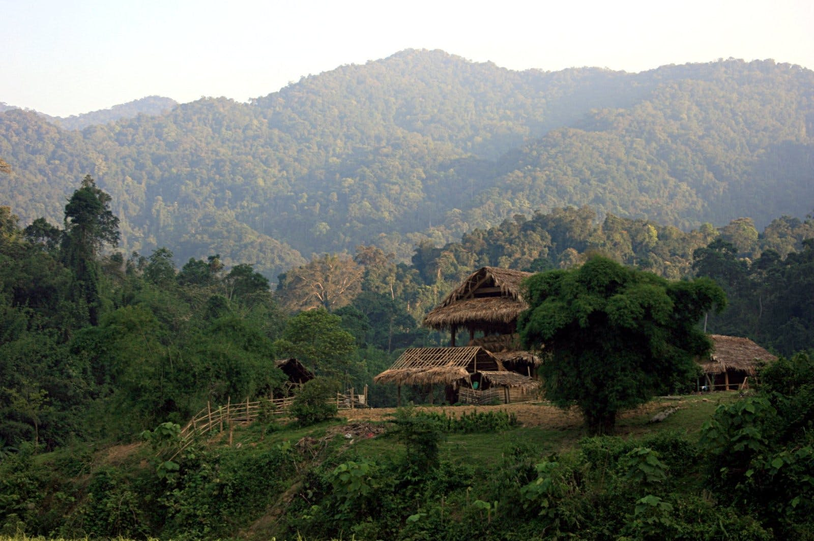 Southern Annamites Montane Rainforests