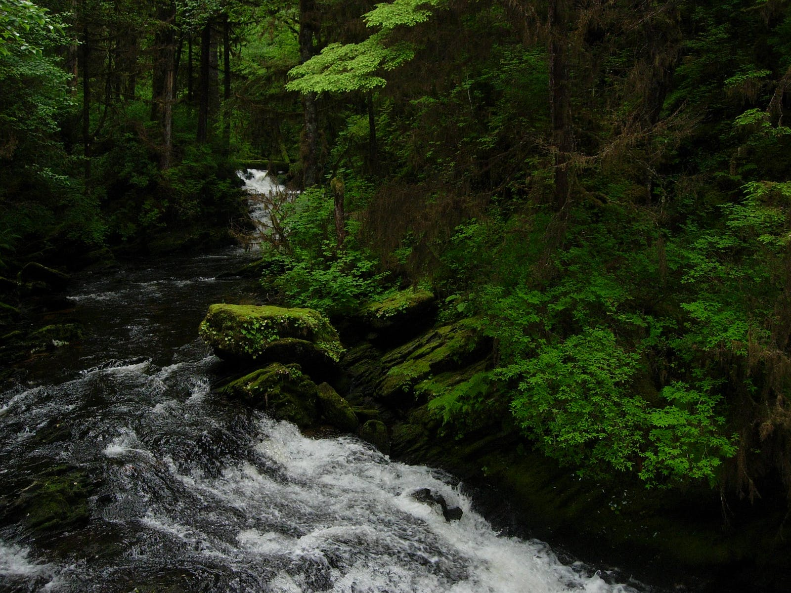 Northern Pacific Alaskan Coastal Forests