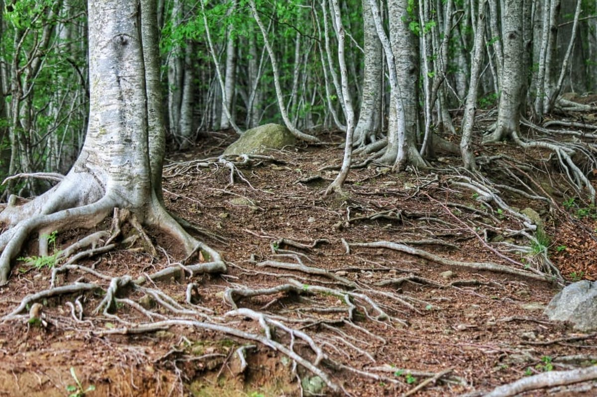 Tapping into underground forests