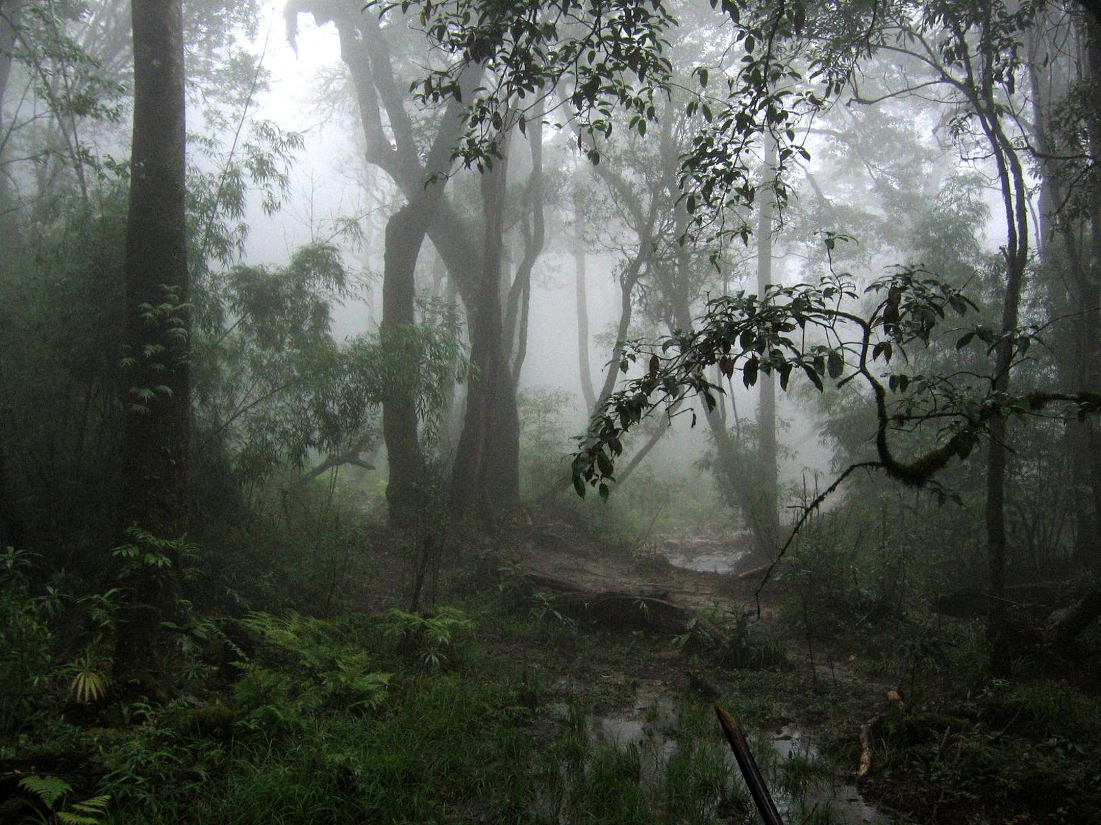 Northern Indochina Subtropical Forests