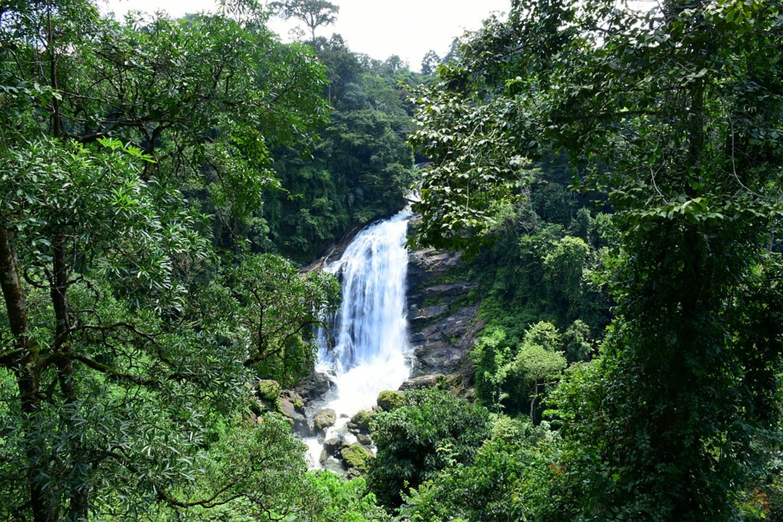 South Western Ghats Montane Rainforests