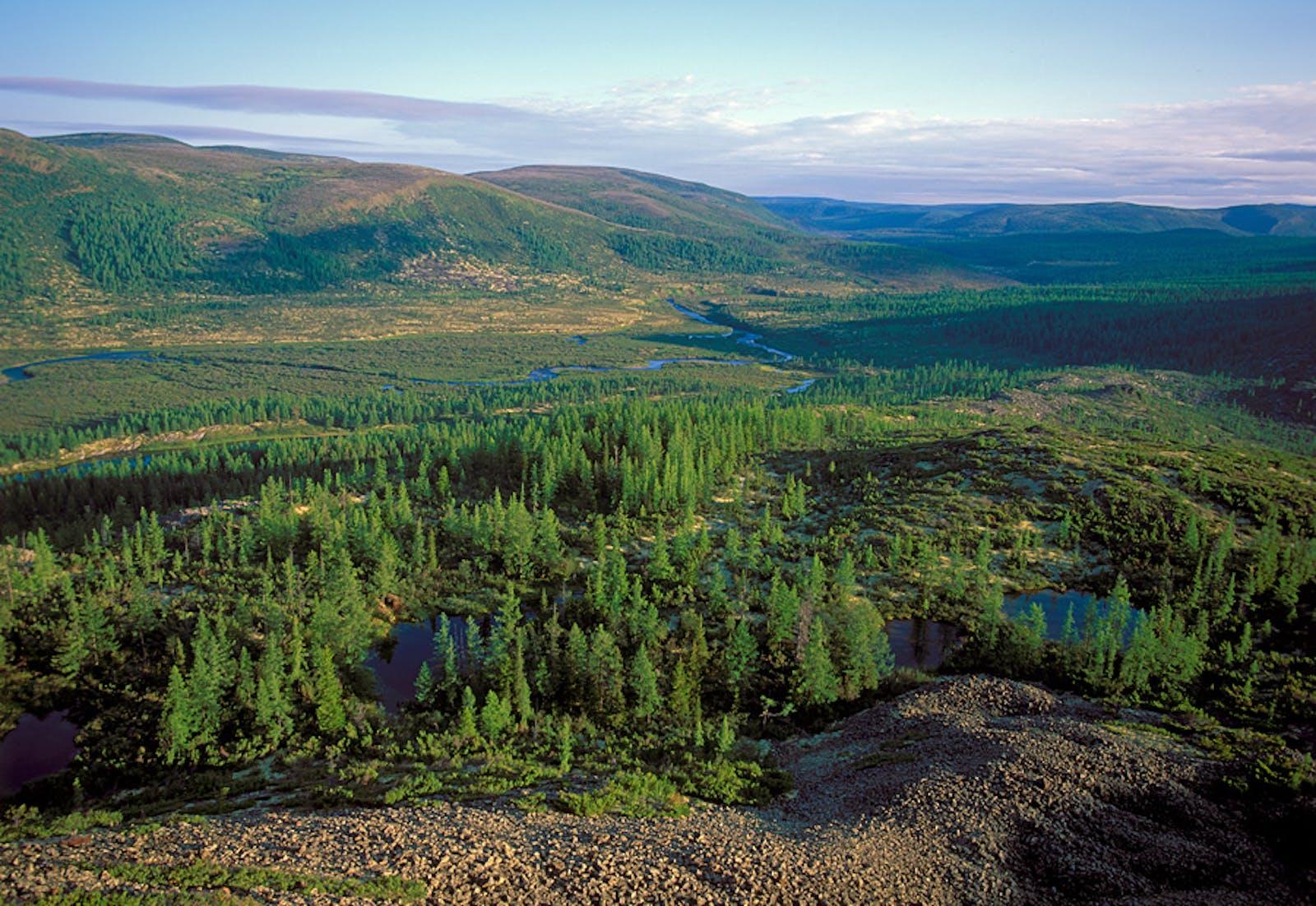 East Siberian Taiga