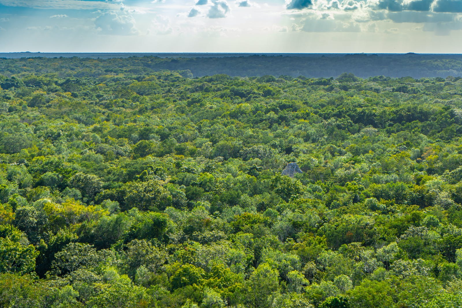 Yucatan Dry Forests