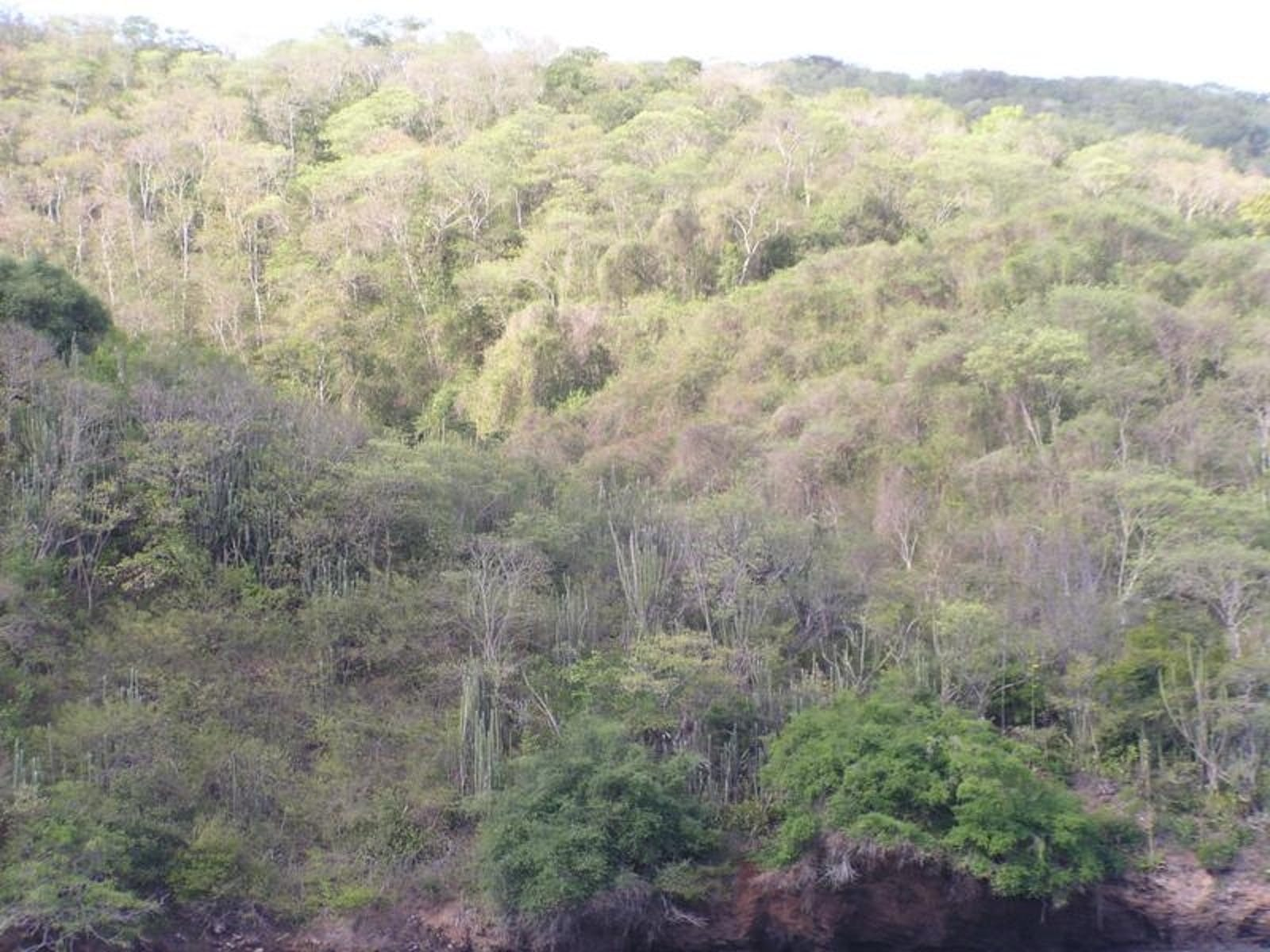 Trinidad and Tobago Dry Forests