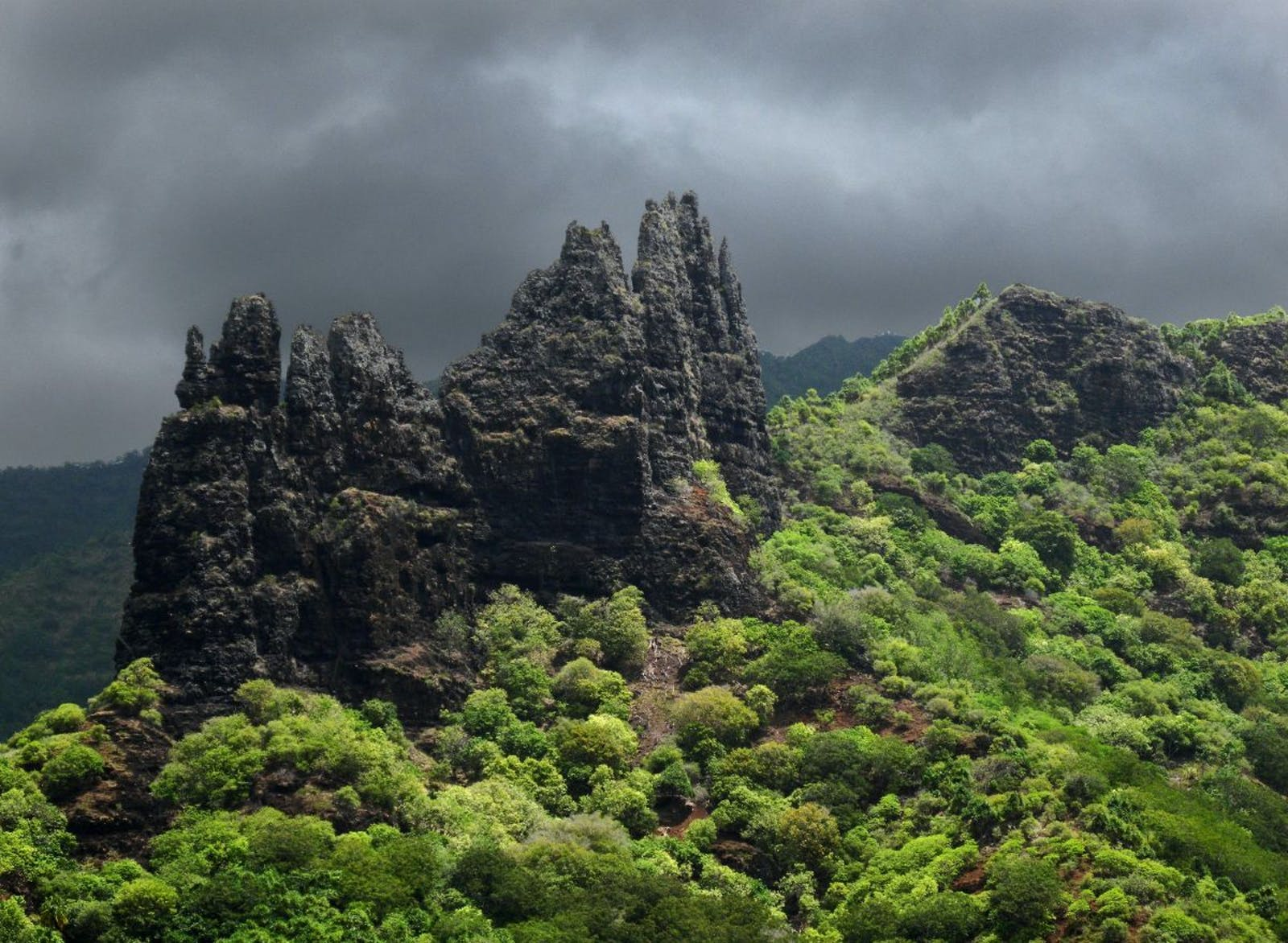 Marquesas Tropical Moist Forests