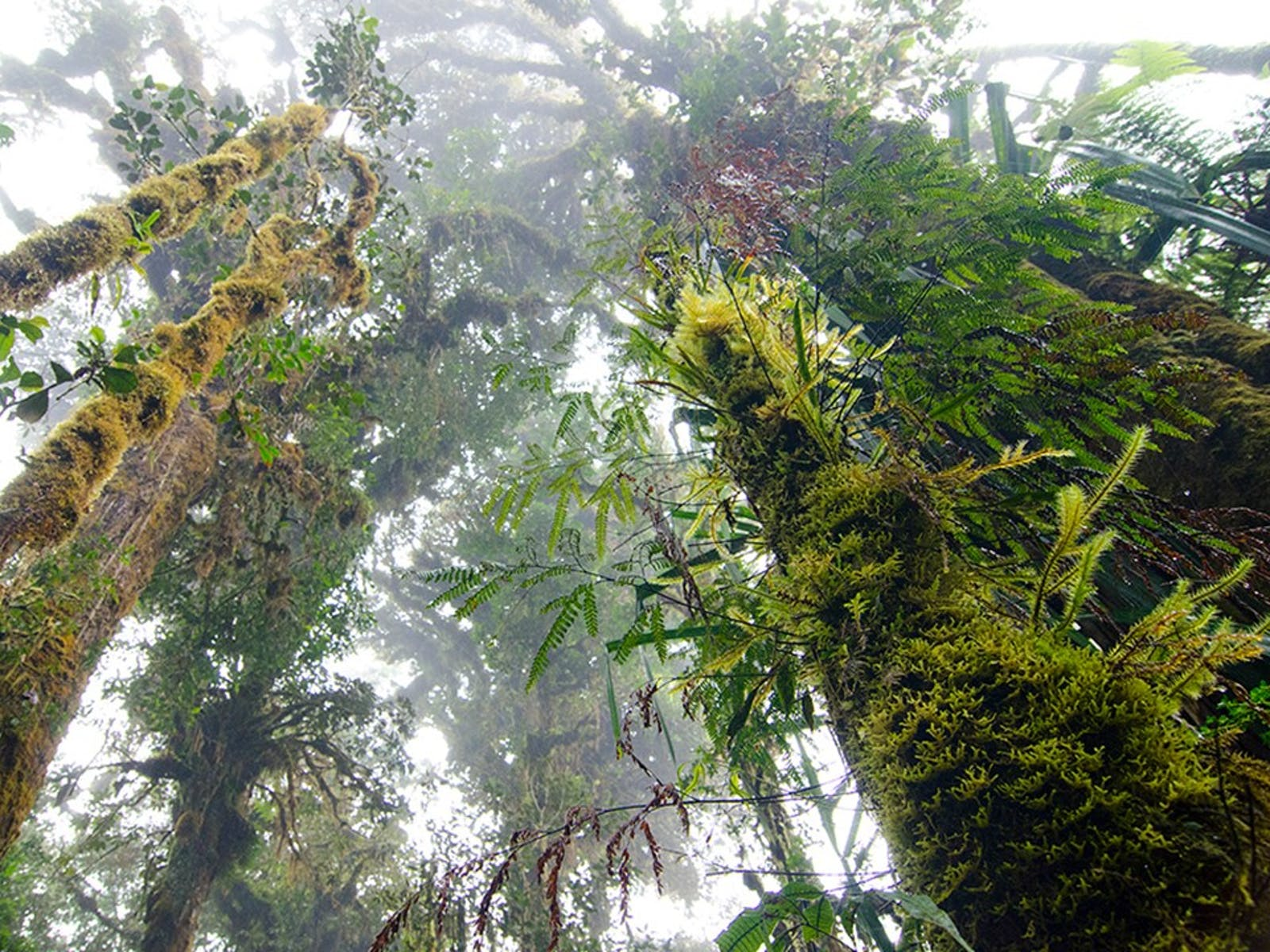 Huon Peninsula Montane Rainforests