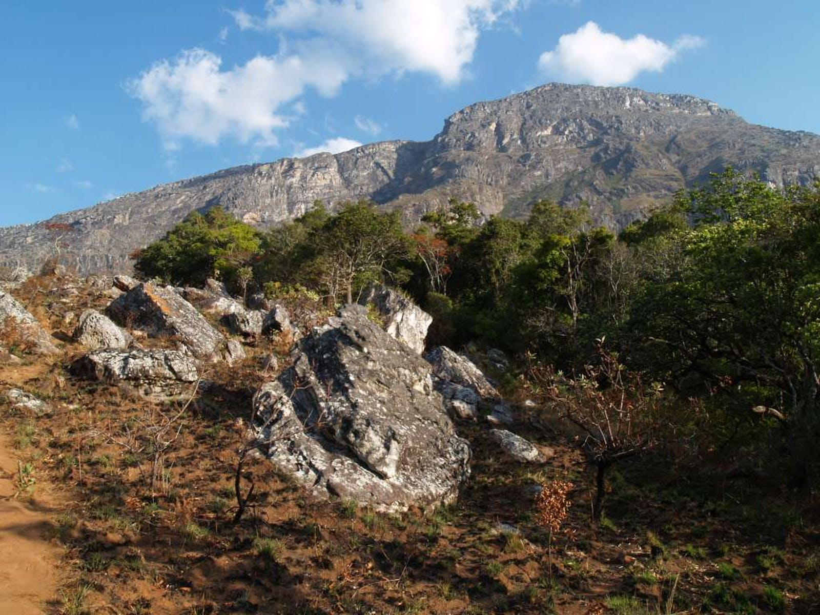 Nyanga-Chimanimani Montane Forest-Grassland