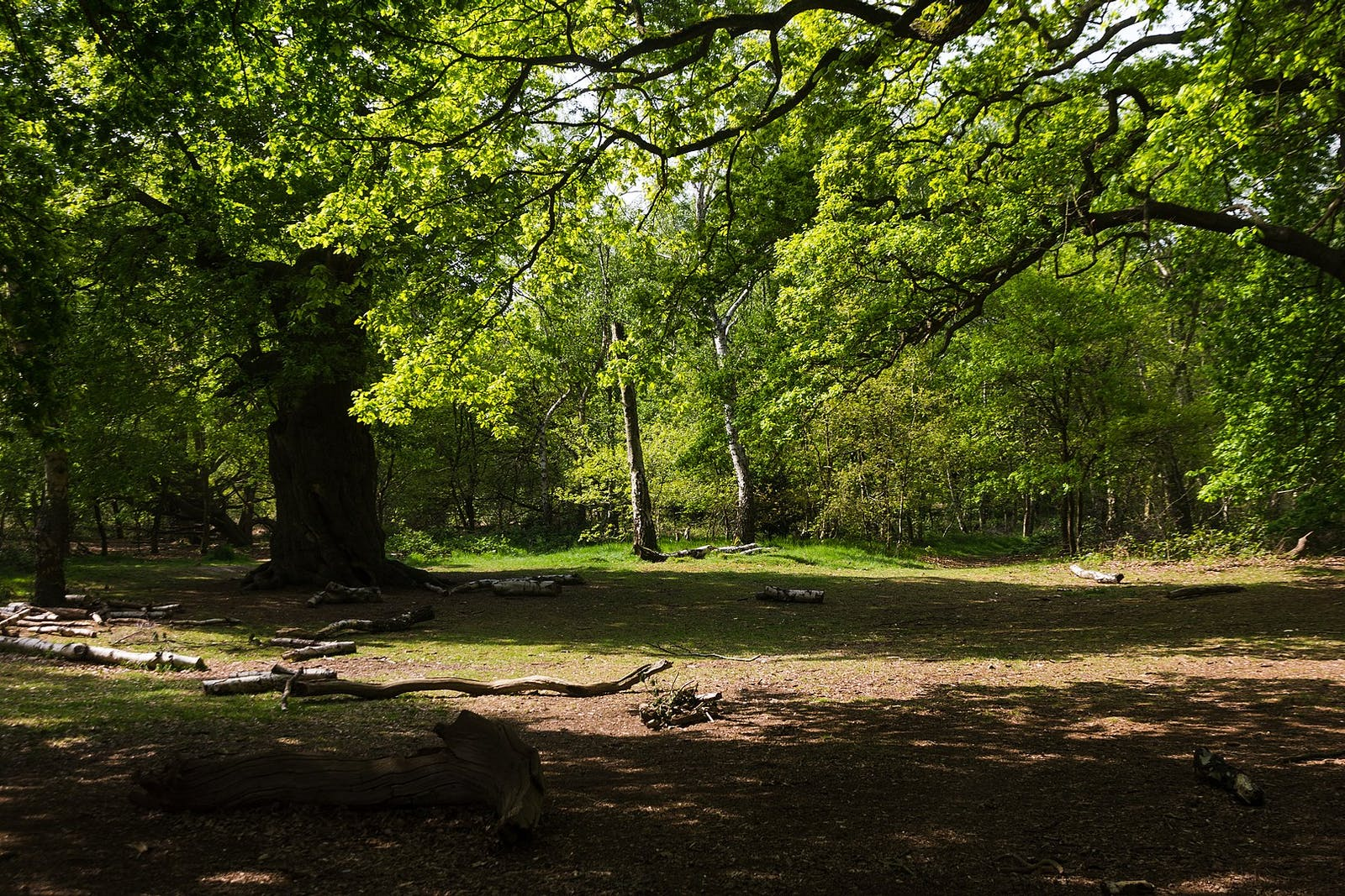 Celtic Broadleaf Forests