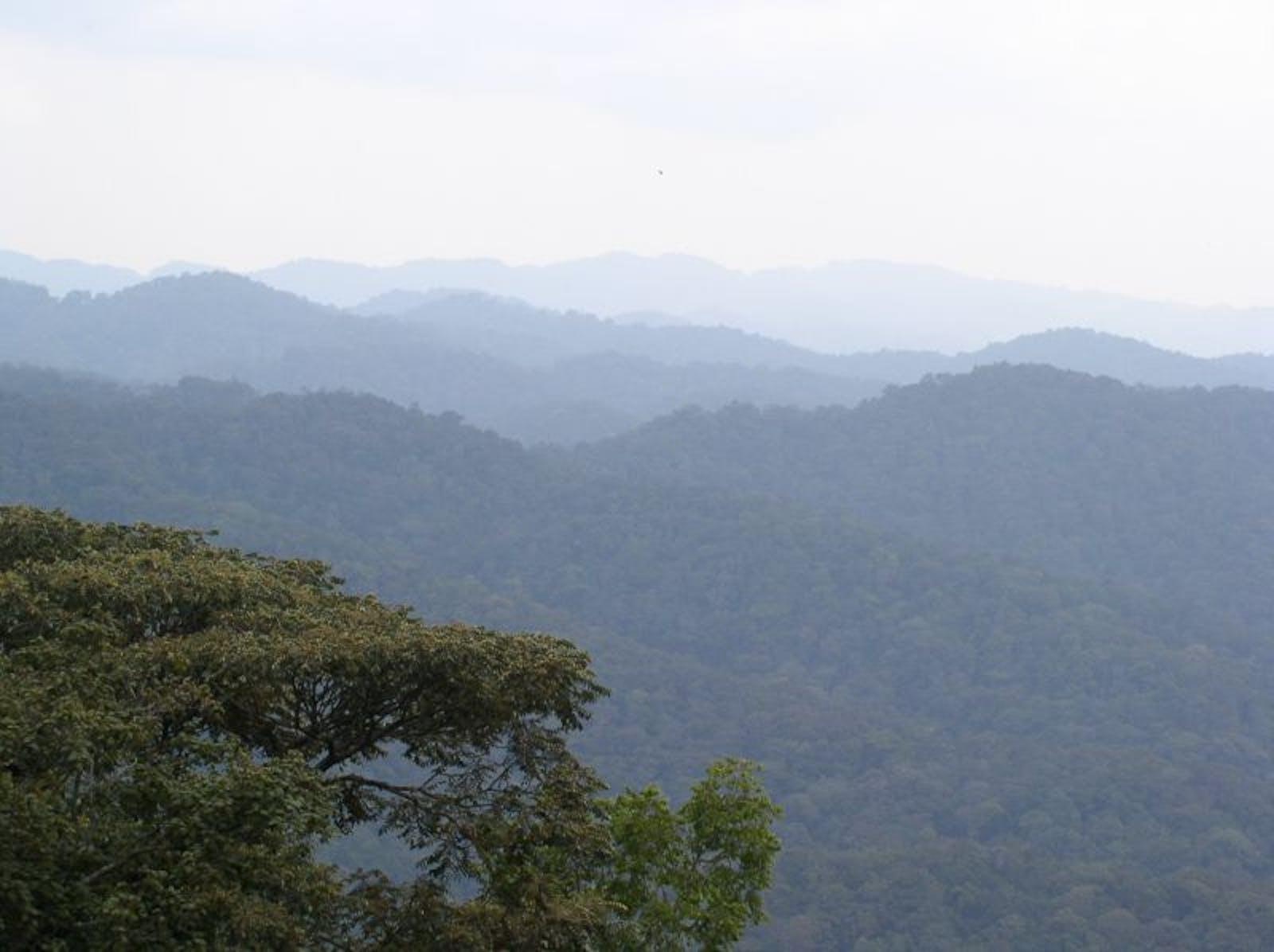 Albertine Rift Montane Forests
