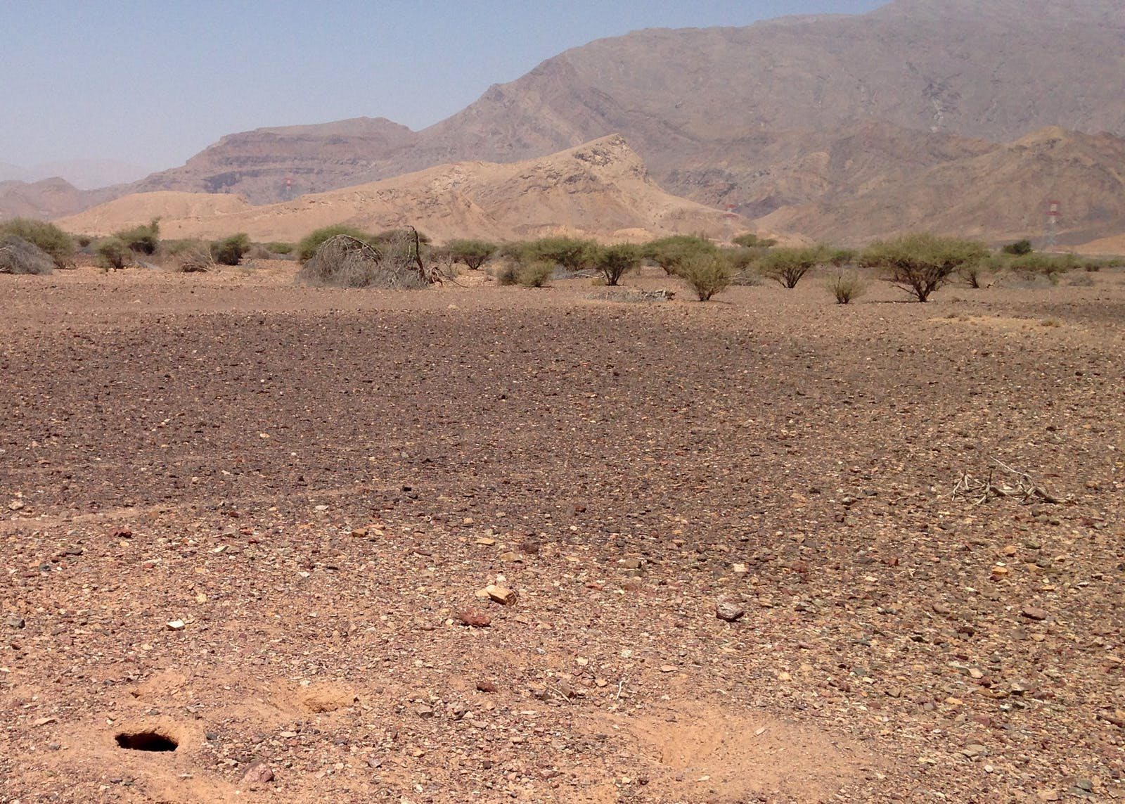 Al-Hajar Foothill Xeric Woodlands and Shrublands