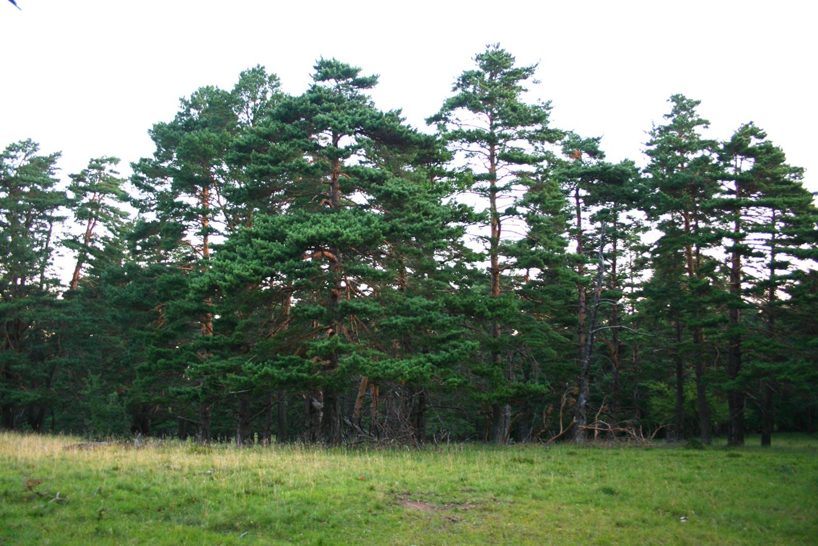 Crimean Submediterranean Forest Complex