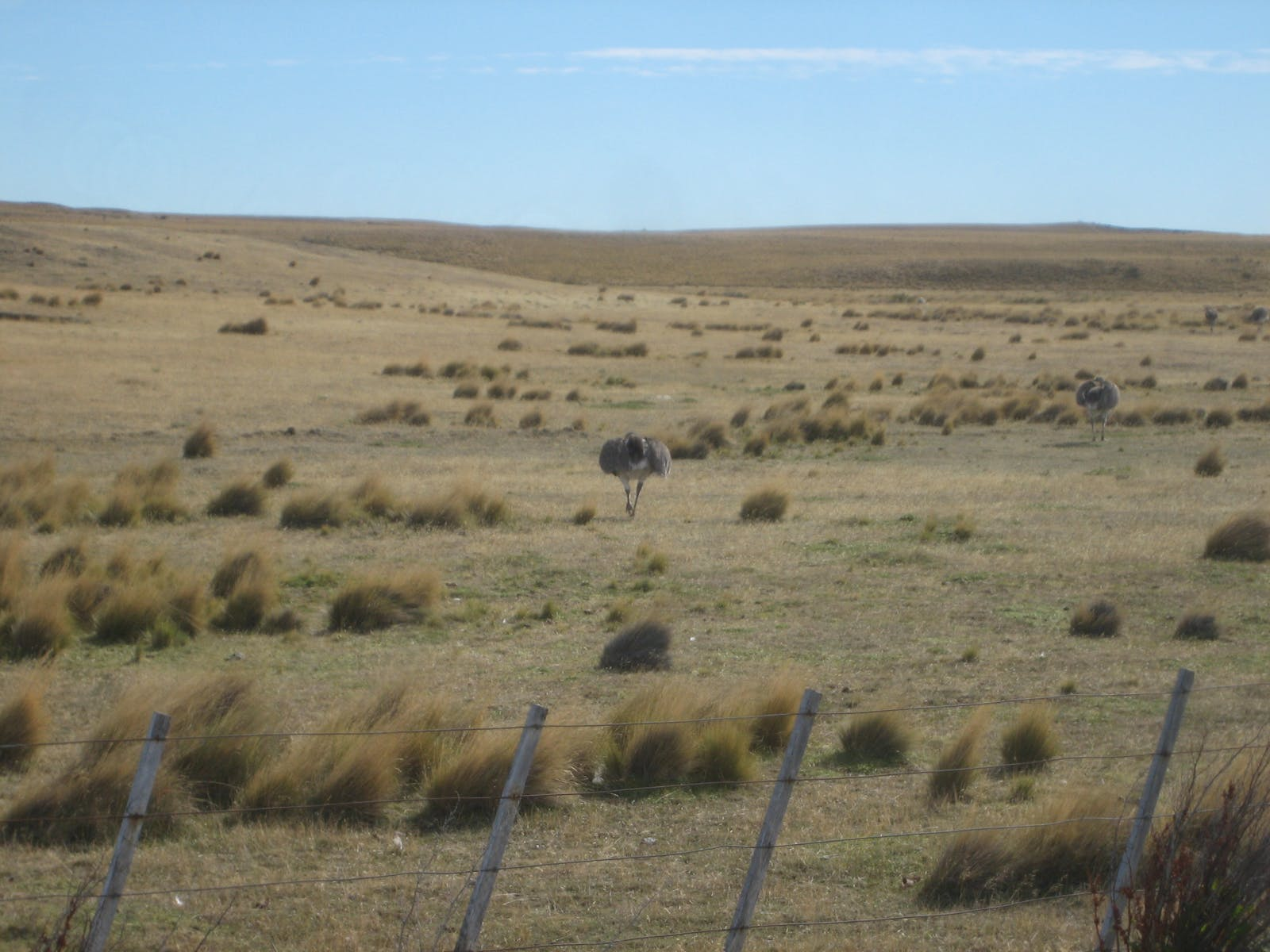 Patagonian Steppe