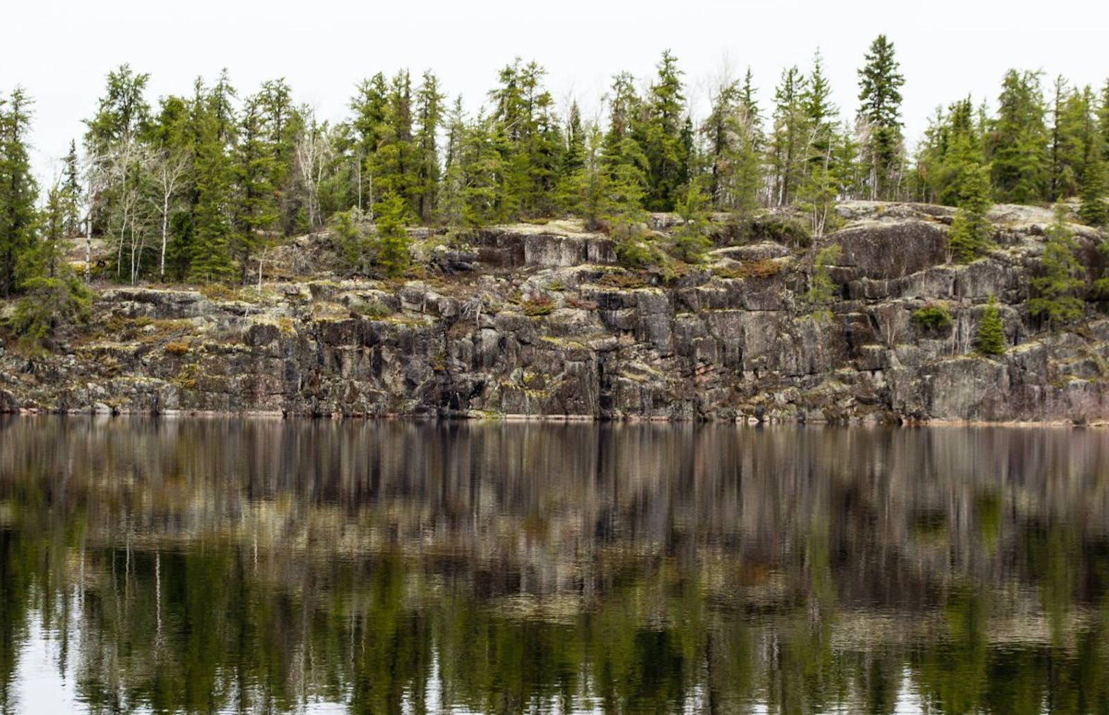 Midwest Canadian Shield Forests