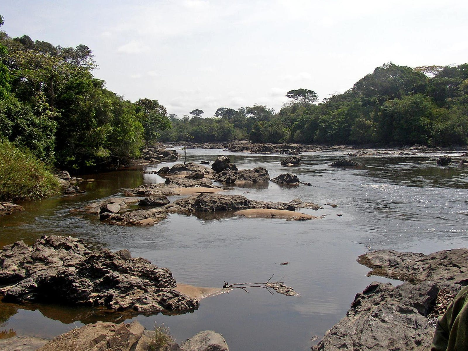 Northeast Congolian Lowland Forests