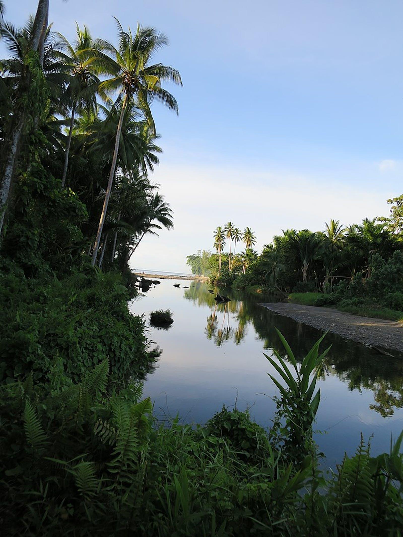 Solomon Islands Rainforests