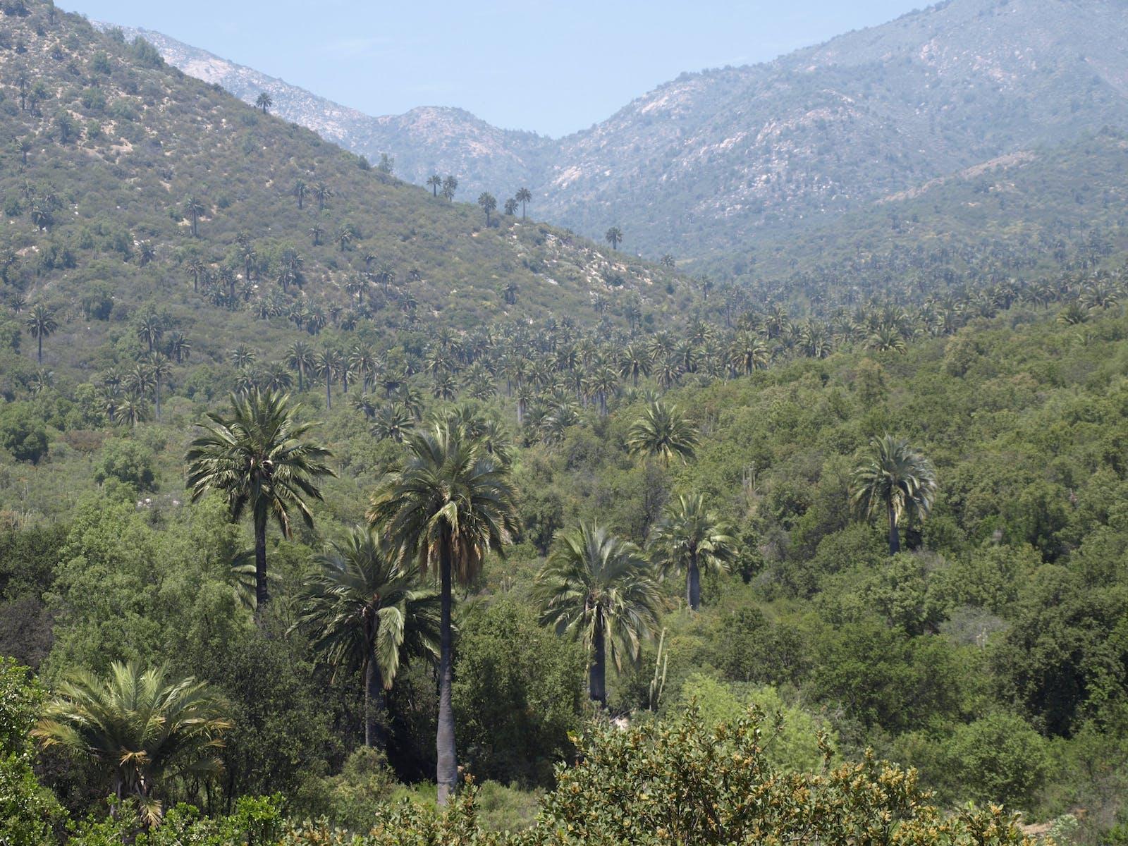 Chilean Matorral