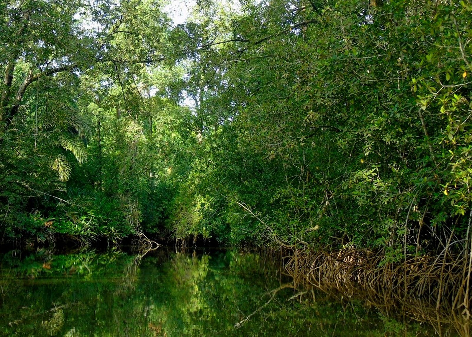 Central African Mangroves