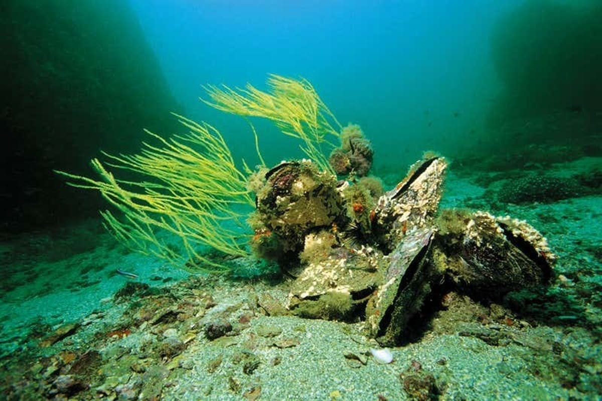 Oysters: nature's water filtration system