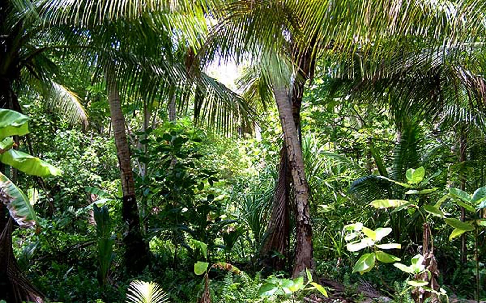 Yap Tropical Dry Forests