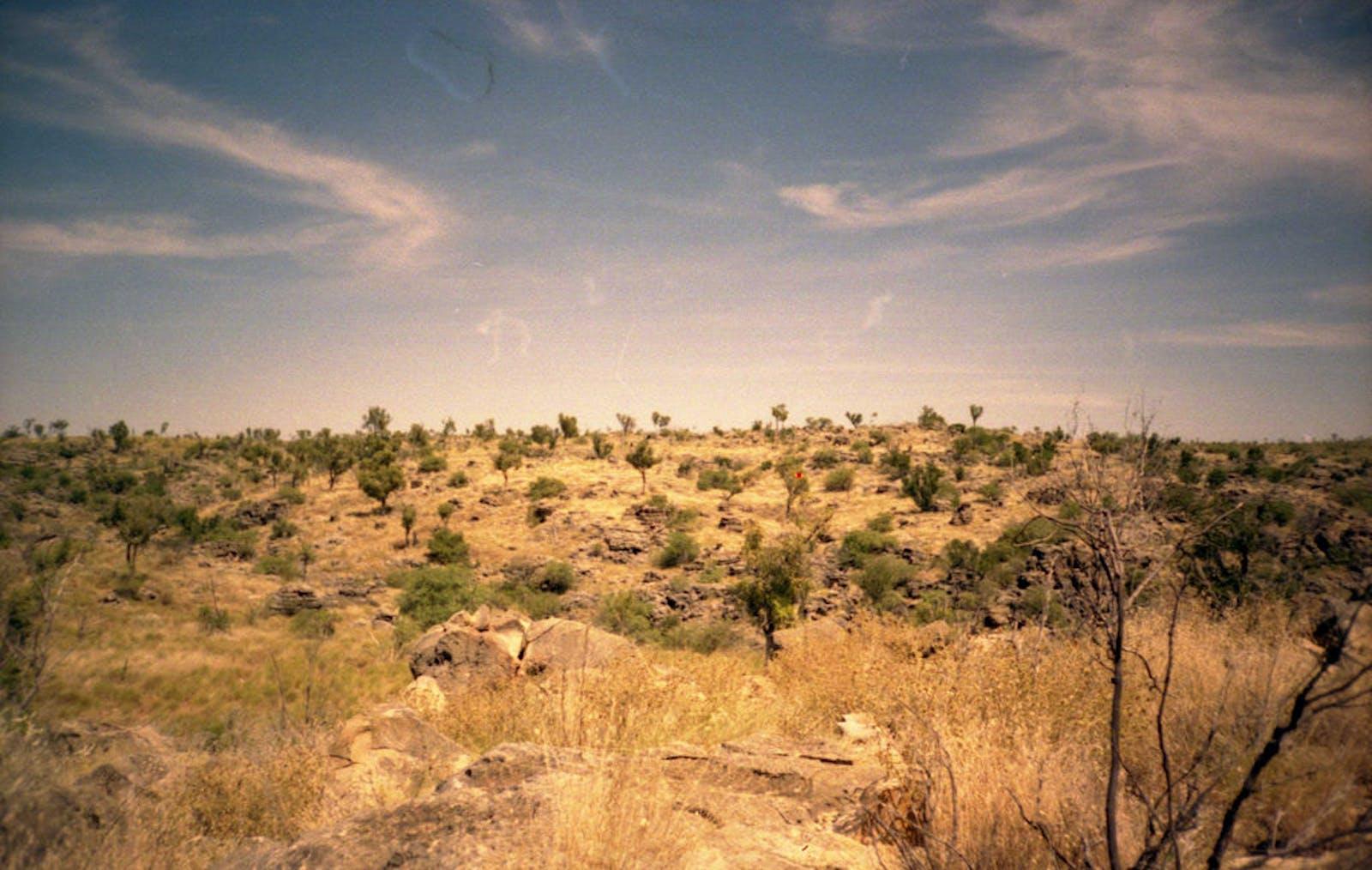 Eastern Australia Mulga Shrublands