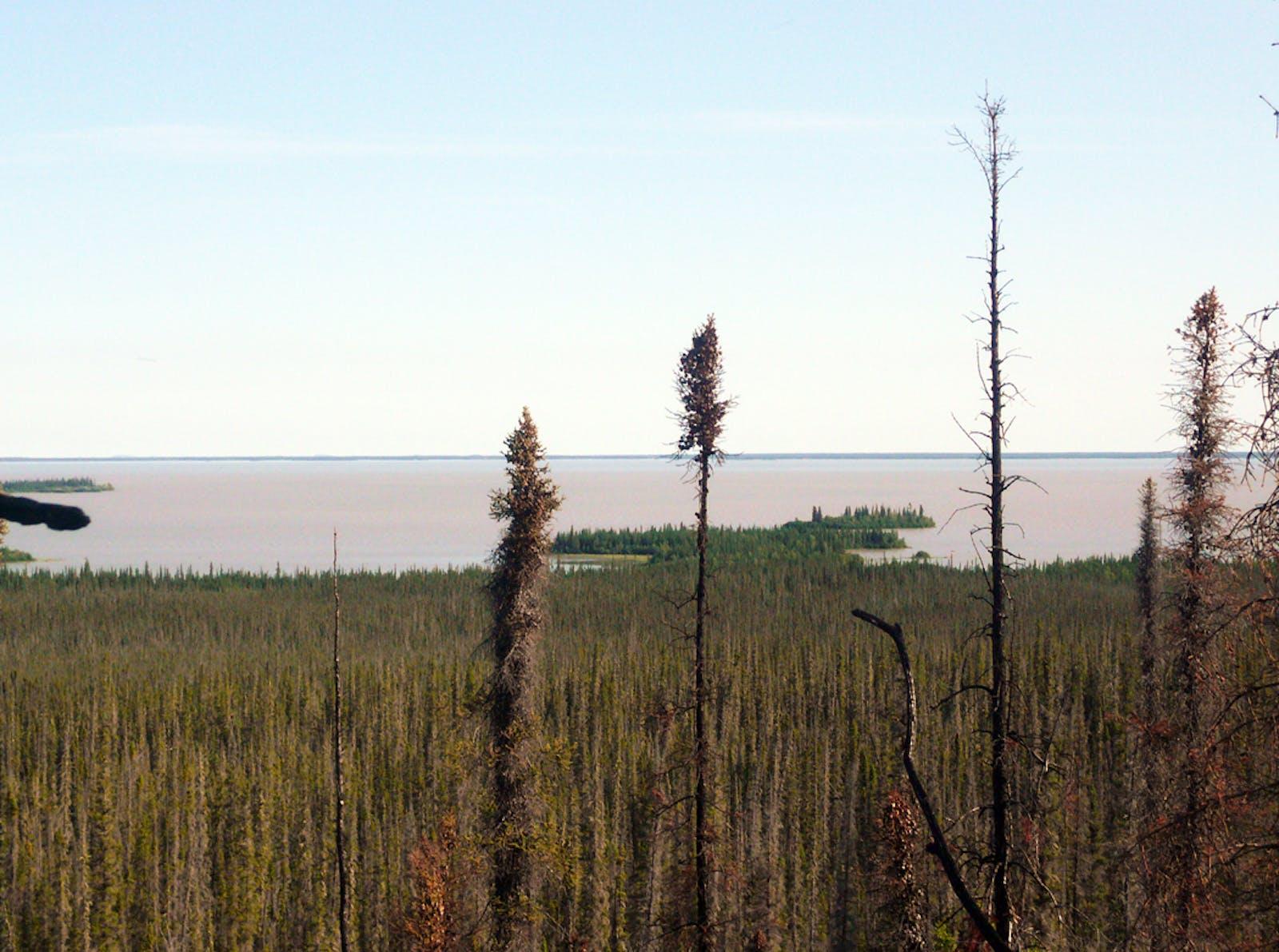 Northwest Territories Taiga