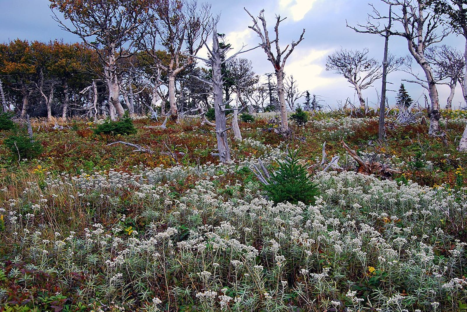 New England-Acadian Forests