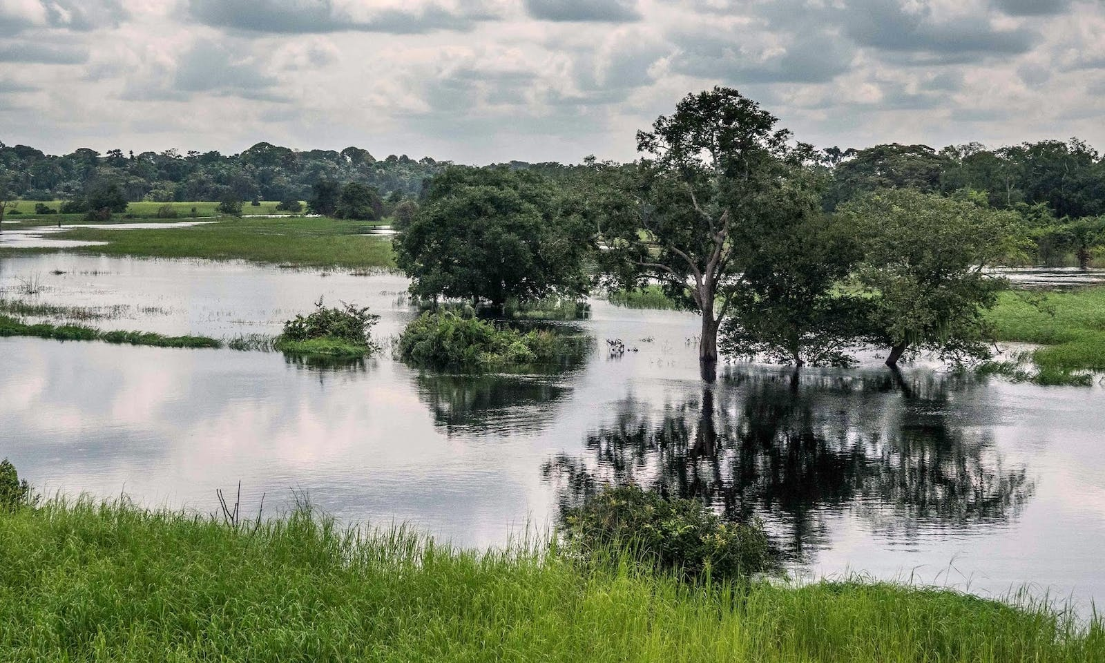 Western Congolian Swamp Forests