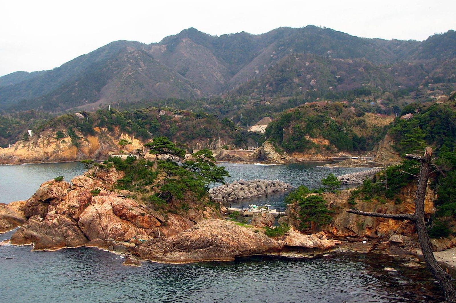 Nihonkai Evergreen Forests