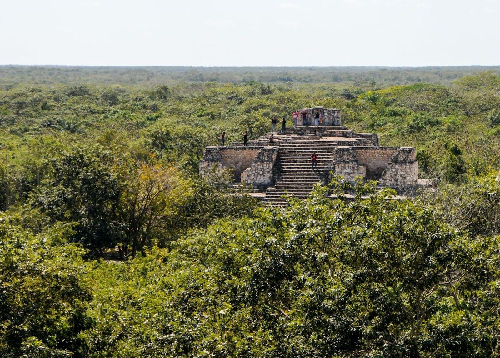 Yucatan Moist Forests