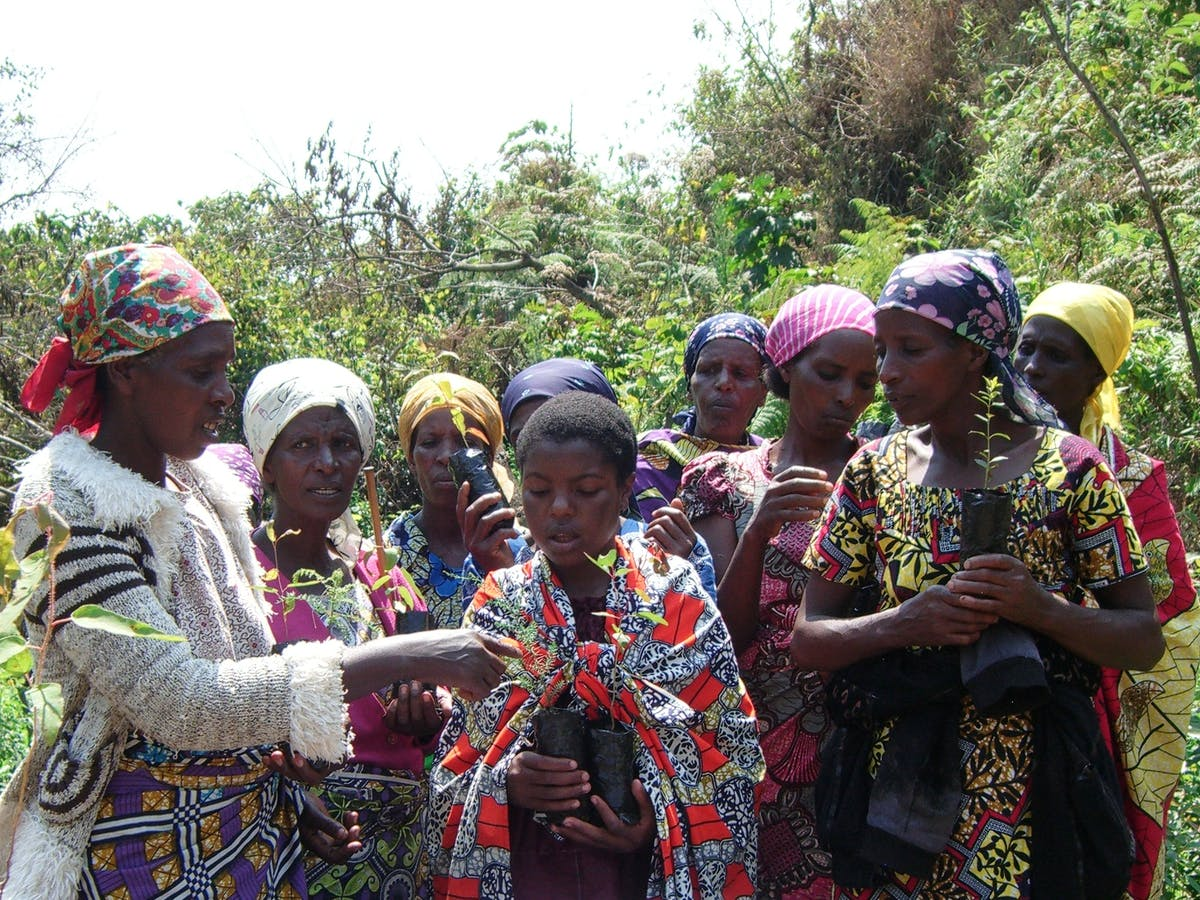 Protecting and Restoring the Itombwe Rainforest through Community Action in the Congo