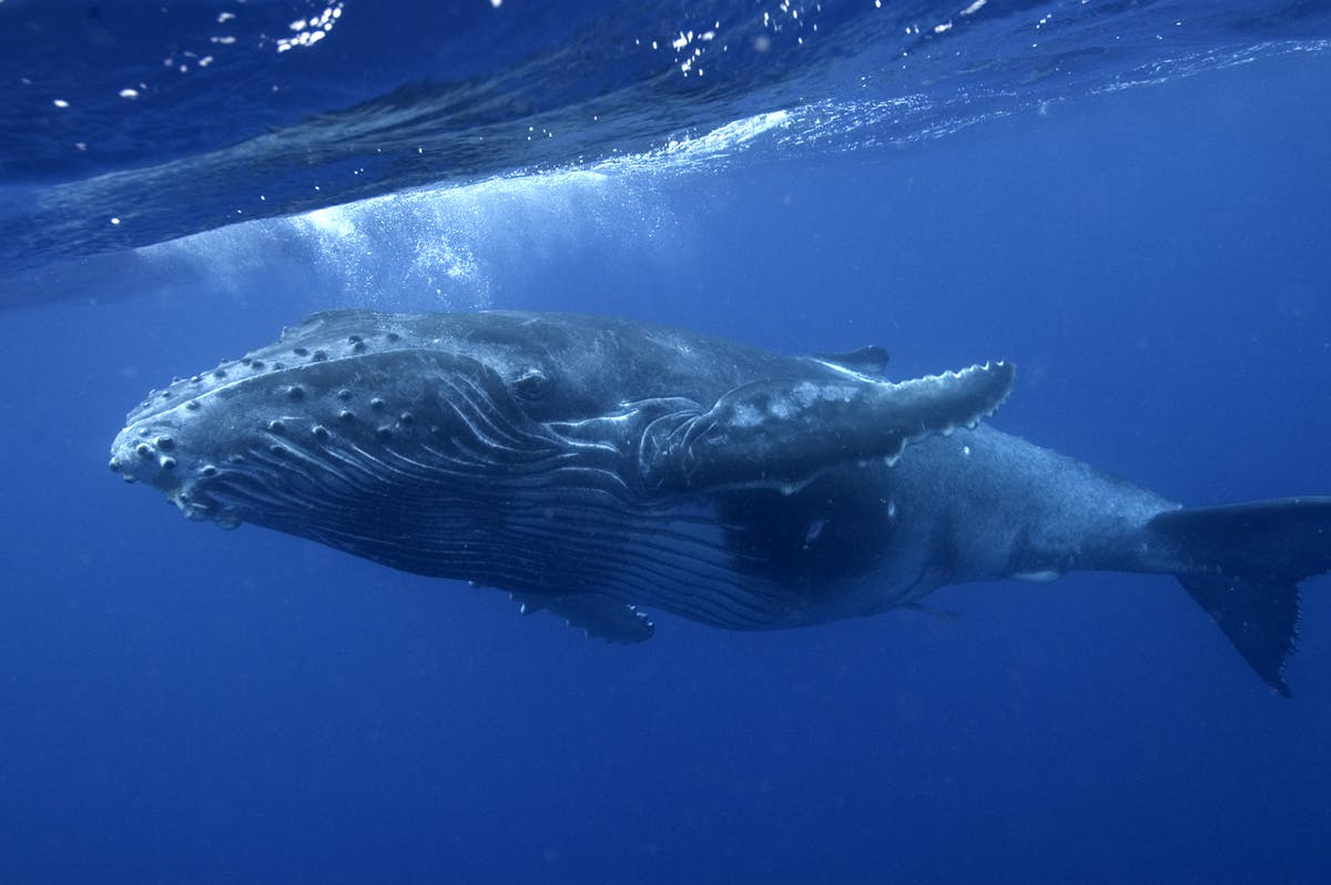 Whales provide a deep water solution to climate change