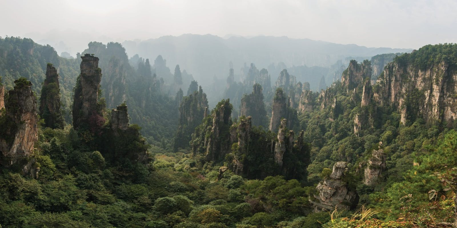 Guizhou Plateau Broadleaf and Mixed Forests