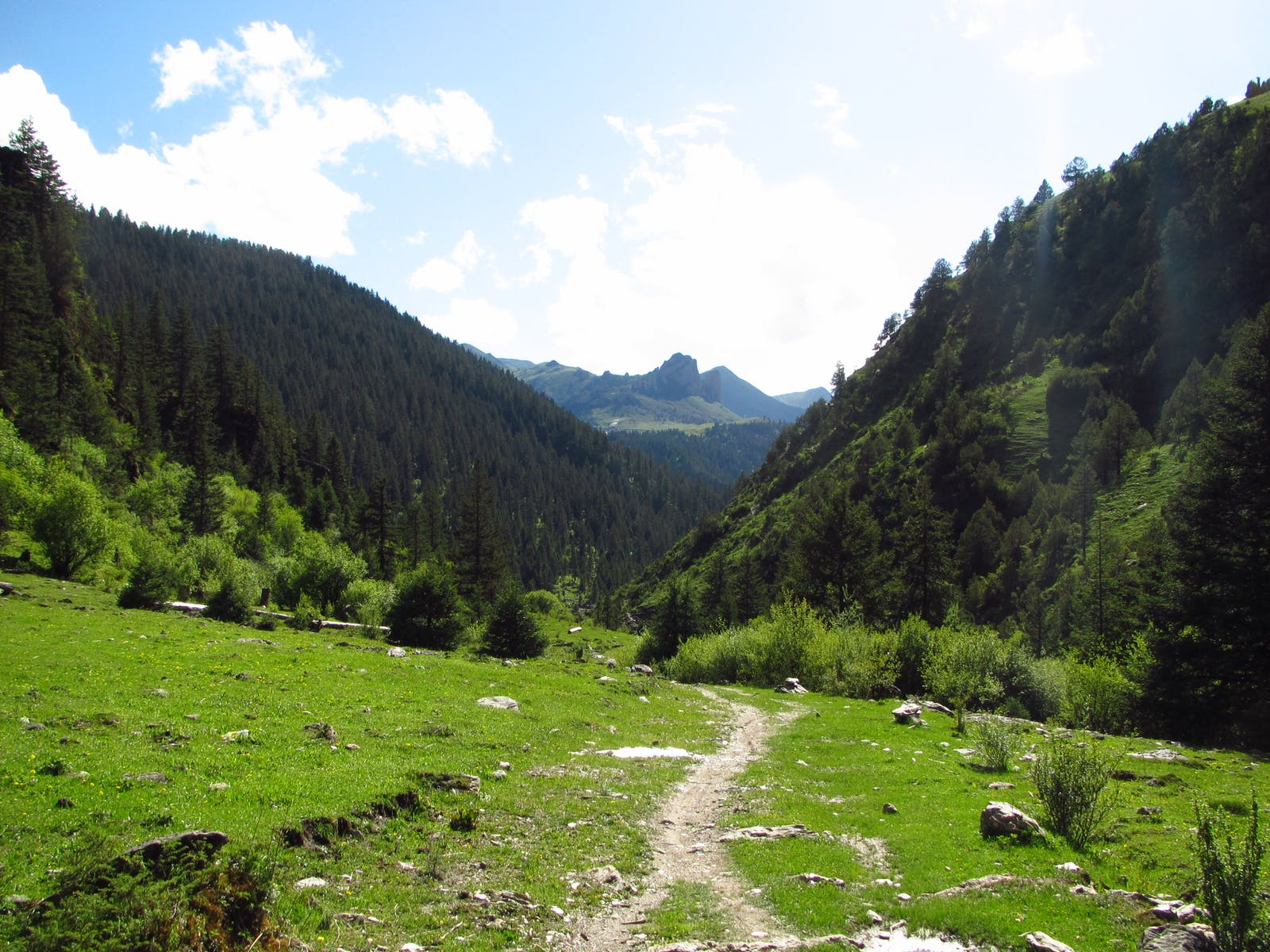 Hengduan Mountains Subalpine Conifer Forests