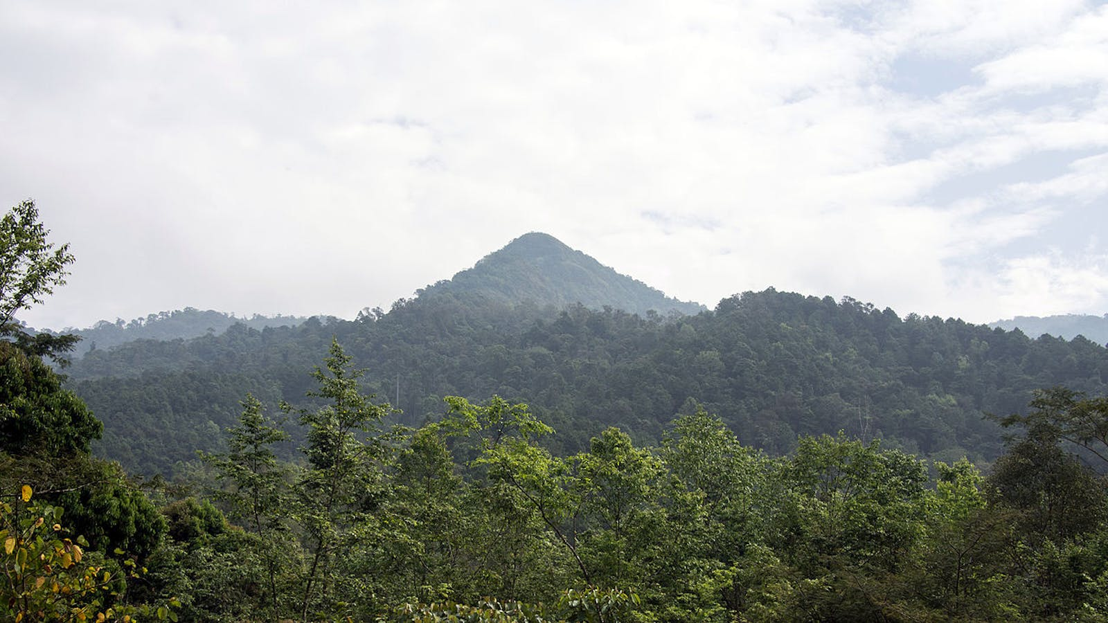 Northern Thailand-Laos Moist Deciduous Forests