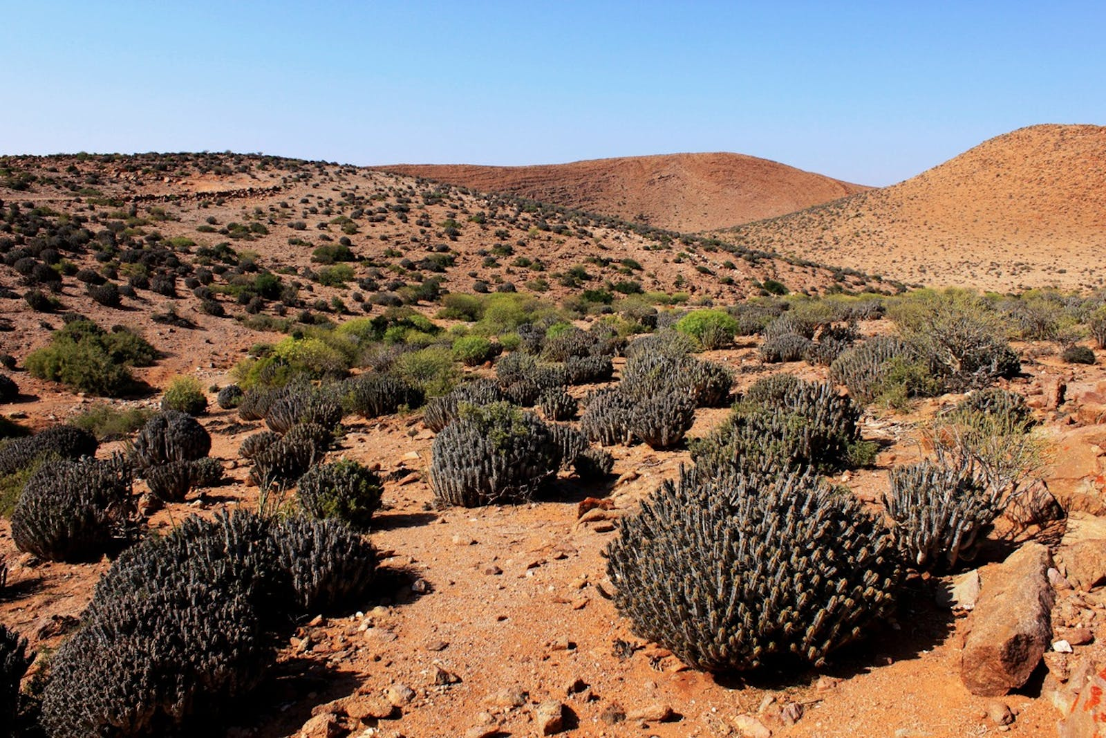 Mediterranean Acacia-Argania Dry Woodlands and Succulent Thickets