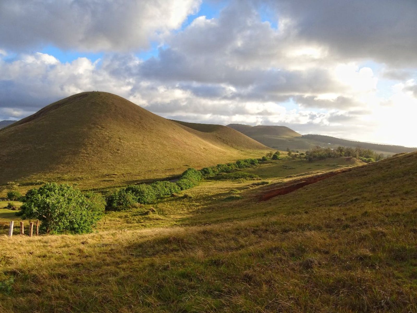 Rapa Nui and Sala Y Gómez Subtropical Broadleaf Forests