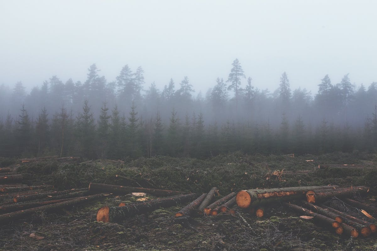 Dangerous delusions: biomass is not a renewable energy source