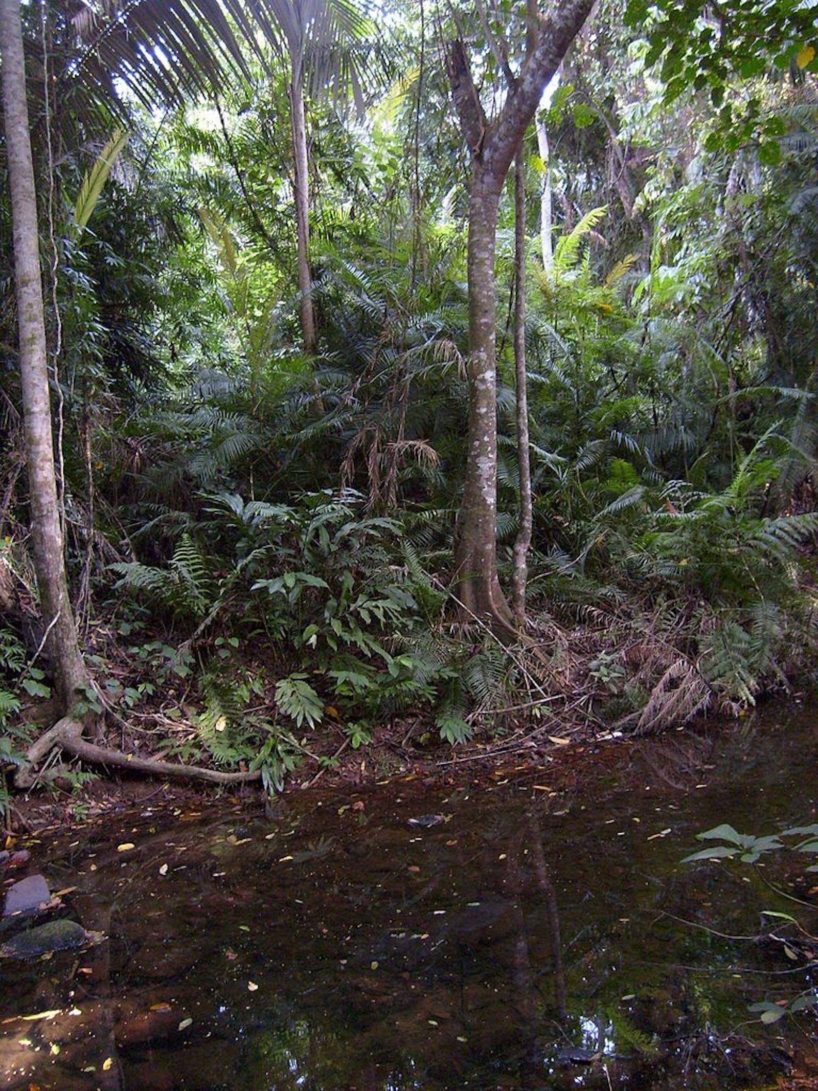 Peninsular Malaysian Rainforests
