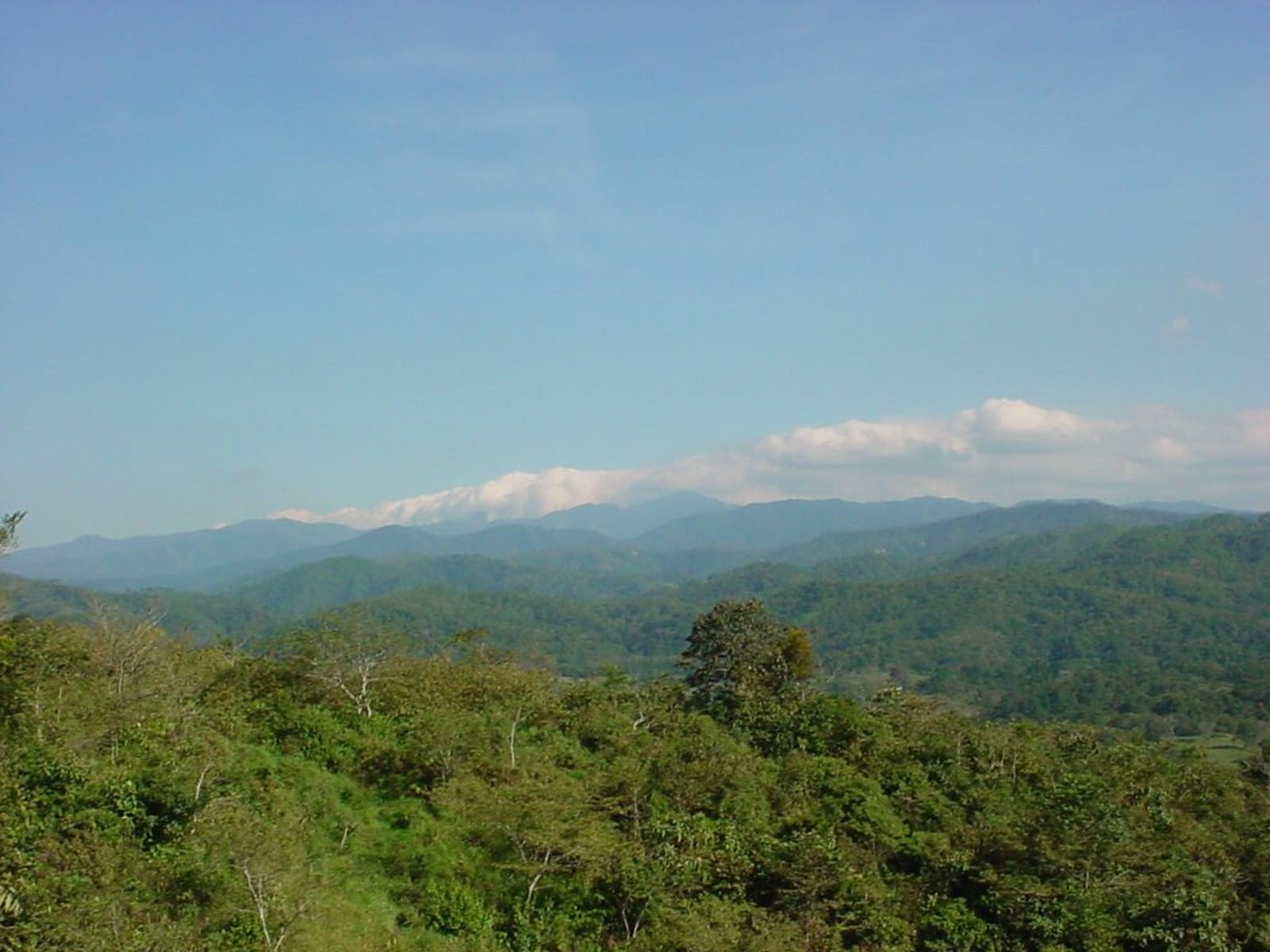 Chimalapas Montane Forests