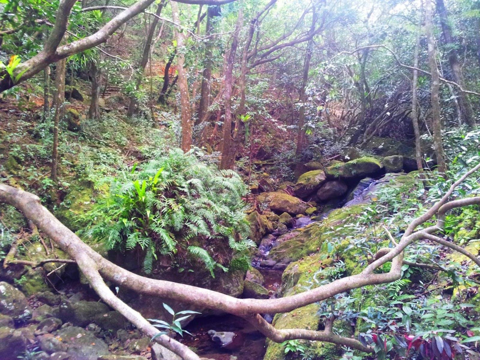 Mascarene Forests